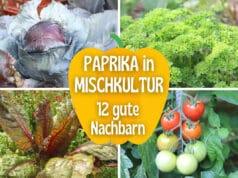 Paprika-Mischkultur
