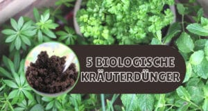 Kräuter düngen - Organische Düngemittel