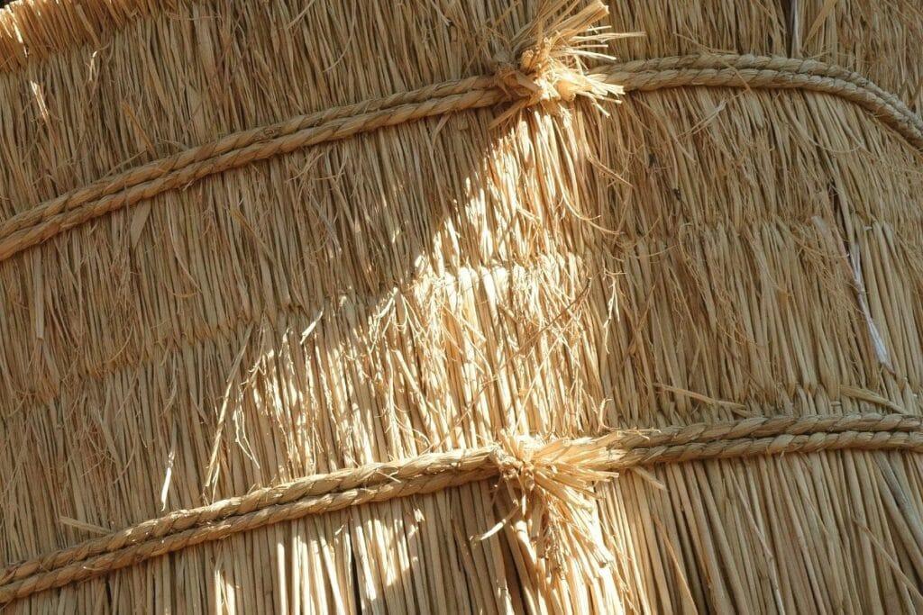 Weinreben im Topf überwintern - Kübel mit Stroh ummanteln