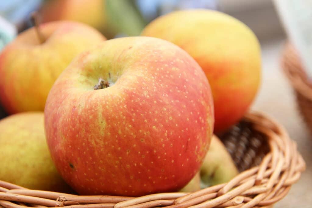 Apfel 'Boskop'
