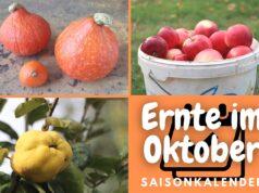 Ernte im Oktober - Äpfel, Kürbisse und Quitten