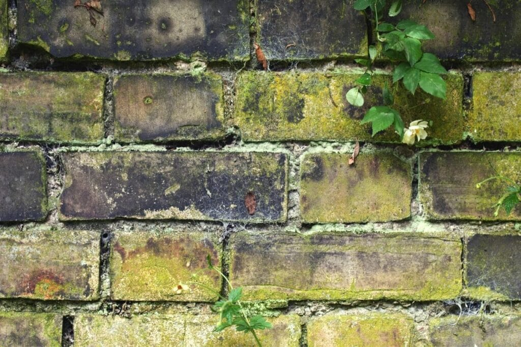 Grünbelag auf Gartenmauer