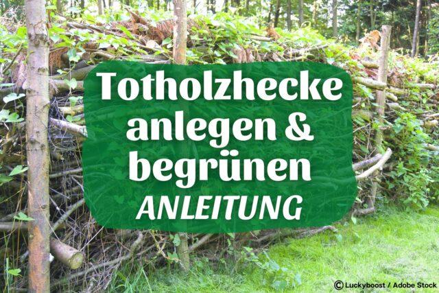 Totholzhecke - Benjeshecke